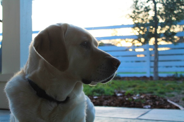 The pup looking quite pensive